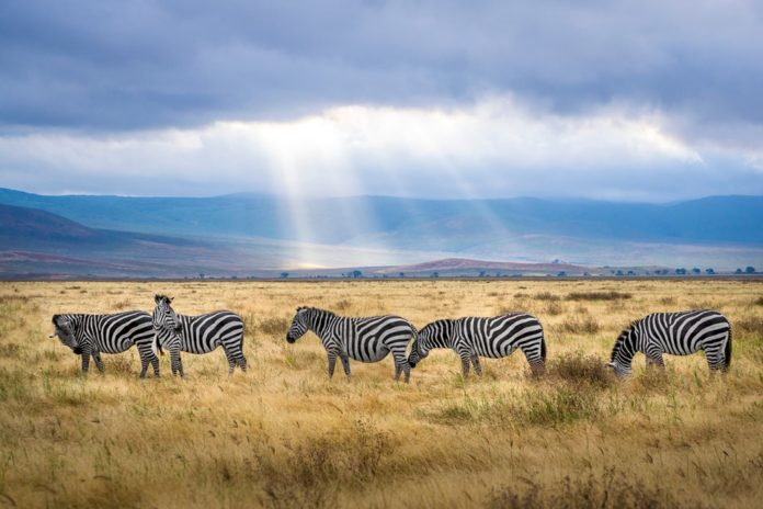Tanzania Safari: Special Places To See - Trade Travel Journal